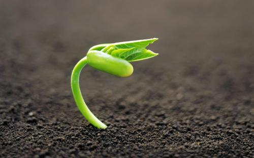 Image result for sprout