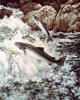 512px-Salmon_fish_swimming_upstream